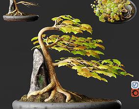 Bonsai No1 Sycamore 3D model