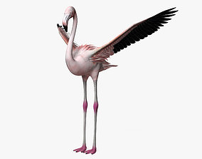 3D model Flamingo HD