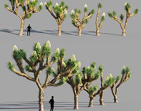 Joshua tree collection 3D