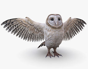3D asset Barn Owl Low Poly