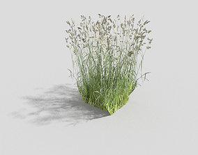 3D asset Grass