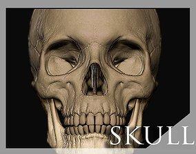 3D character Skull