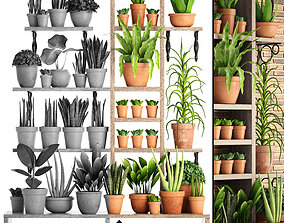 3D collection of plants in clay pots PART 2
