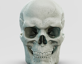 Male Skull for the Medical Area 3D model