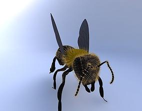 3D model Bee-w-Hair-w-texture