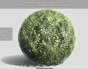 3D model Low-Poly Boxwood Bush Version 3
