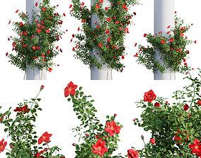 Rosa Altissimo - Climbing Rose 02 3D model