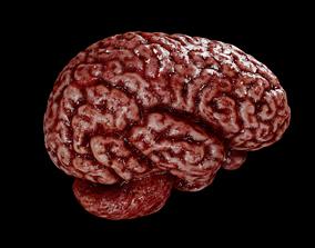 3D model VR / AR ready Human brain