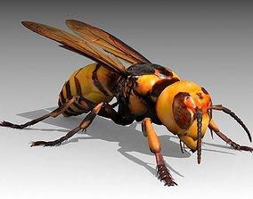 Giant Hornet 3D asset