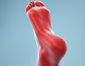 3D Neutral Pose Realistic Foot Model 01