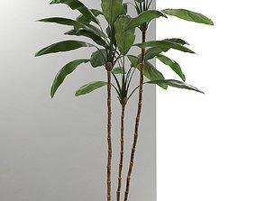 3D Cordyline Plant