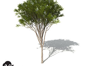 XfrogPlants Australian Tea Tree 3D