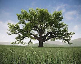 Realistic Broadleaf Oak Trees for 3D asset