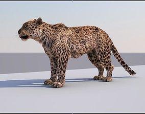 3D Leopard textured riged