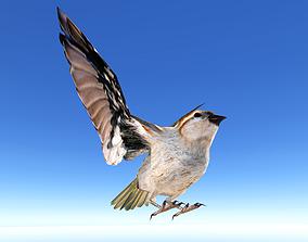 3D asset Sparrow Bird