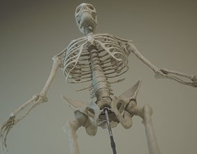Skeleton Anatomy 3D model