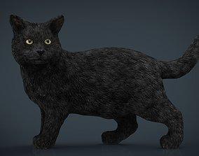 Black Cat 3D asset
