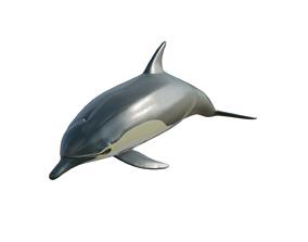 dolphin long-beaked 3D