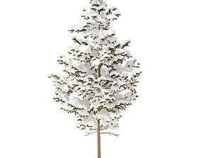 Pine Tree with Snow 5point5m 3D