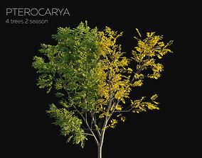 3D model 8 Tree Pterocarya 2 season Summer Autumn