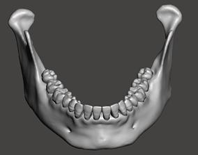Real human mandibular jaw anatomy with 3D print model
