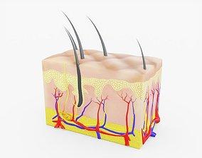 3D asset Skin Anatomy