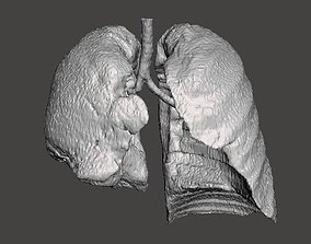 Human lungs DEMO 3D