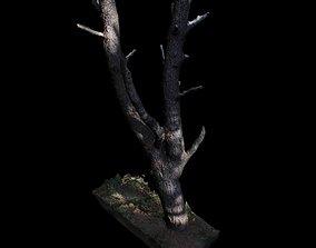 3D Big Tree trunk models