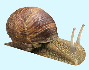 Snail Animated and Rigged 3D model realtime