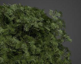 3D 2021 PBR False Cypress Hedges Collection -