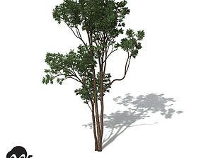 3D XfrogPlants Brigalow