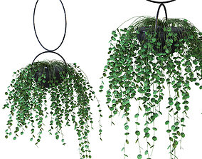 Plant in a hanging planter 3D model