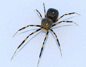 House Spider 3D model