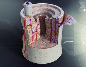 3D Human Bone Anatomy