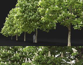 3D model Chestnut-tree 02 H7-11m