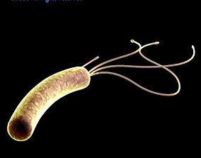 3D Helicobacter pylori bacteria