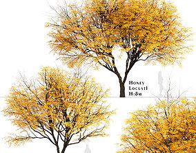 Set of Honey Locust or Gleditsia Triacanthos Trees - 2 3D