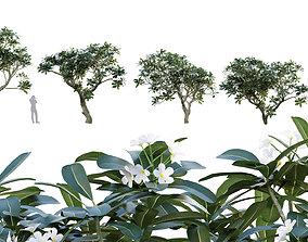 3D model Plumeria Obtusa - White Frangipani - 01