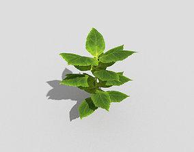 low 3D model low-poly Low poly Plant