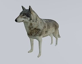 Wolf - Low poly and High poly - Lobo 3D asset