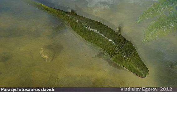 Paracyclotosaurus davidi