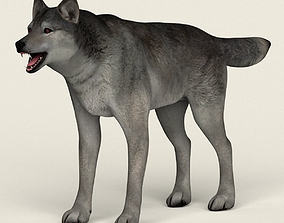 Low Poly Realistic Grey Wolf 3D asset