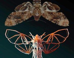 3D printable model Deaths Head Hawkmoth Skeleton