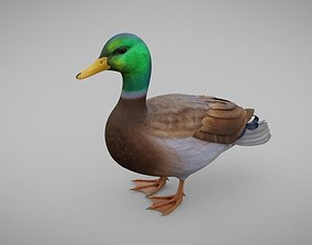 3D model VR / AR ready Realistic Duck