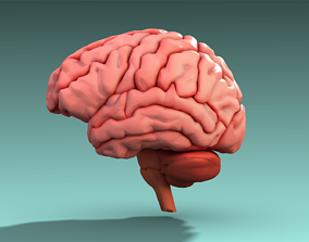 Brain 3D model VR / AR ready