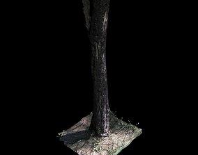 3D model Tree 4 scanned