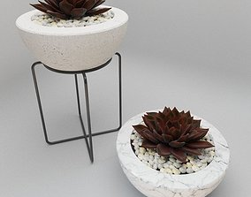 Succulent in bowl with stones 3D model