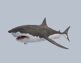 Great White Shark 3D model rigged
