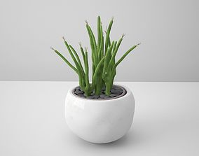3D Snake White Potted Cactus