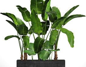 Banana Tree set 4 3D model